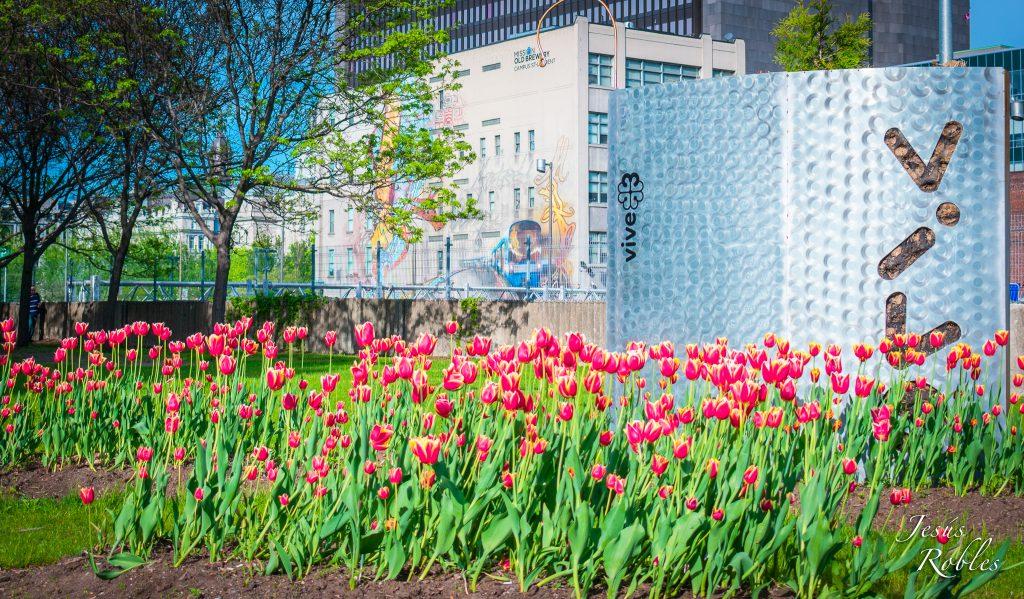 Tulipanes son atractivo en Montreal